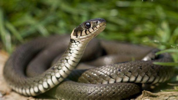 Výskyt hadov v našom okolí a ich ochrana